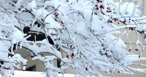 снег_reswm_1