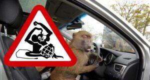 Пьяный за рулем хуже обезьяны с гранатой