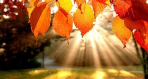 Октябрь будет теплым