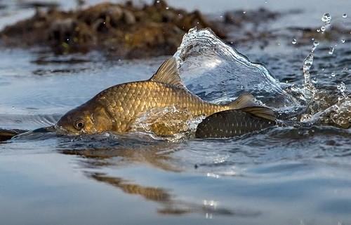 Нельзя рыбачить, даже если очень хочется